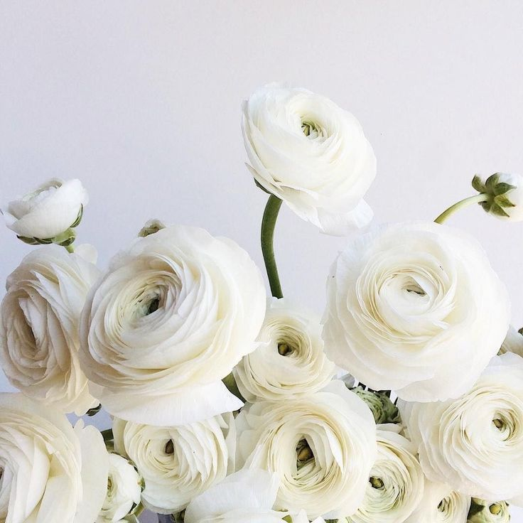 white ranuulas 2